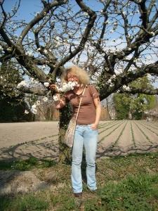 ninabel-parmis-les-fleurs-de-cerisier